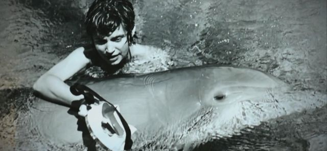 Margaret Lovatt, kobieta, która rozkochała w sobie delfina