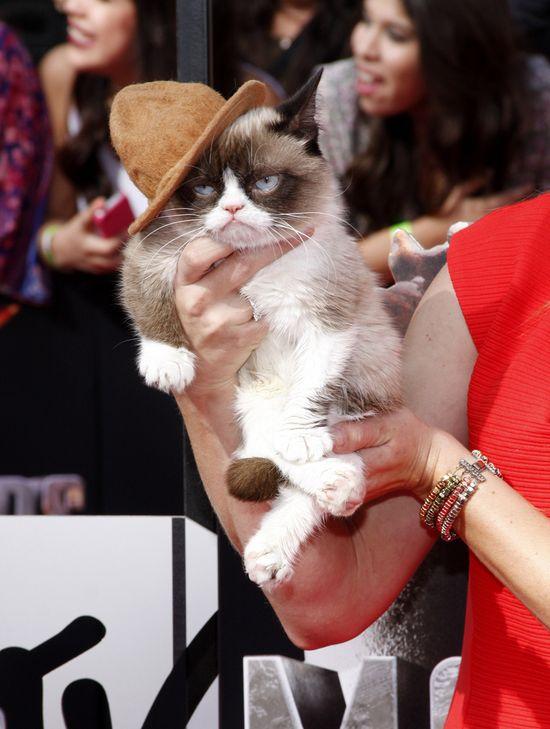 Grumpy Cat pokazał, gdzie ma swoich fanów (FOTO)