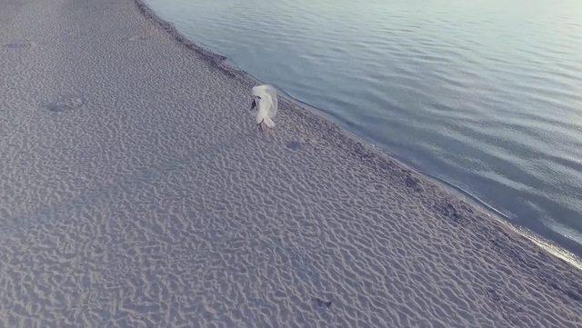 Morze słów - nowy teledysk Honoraty Skarbek [VIDEO]