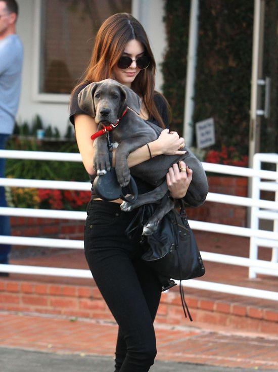 Jak długo Kendall Jenner będzie zajmowała się nowym pupilem?