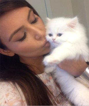 Mercy – kot Kim Kardashian pracuje na status gwiazdy (FOTO)