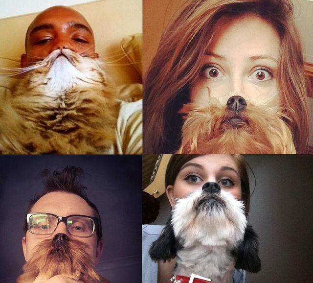Moda na brodę z kota lub psa