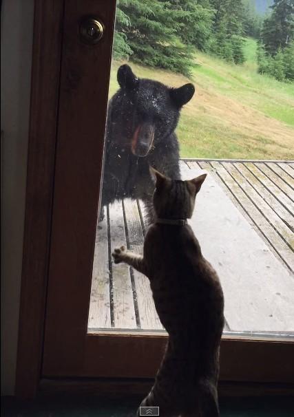 To co zrobił ten kot jest NIESAMOWITE! (FOTO)