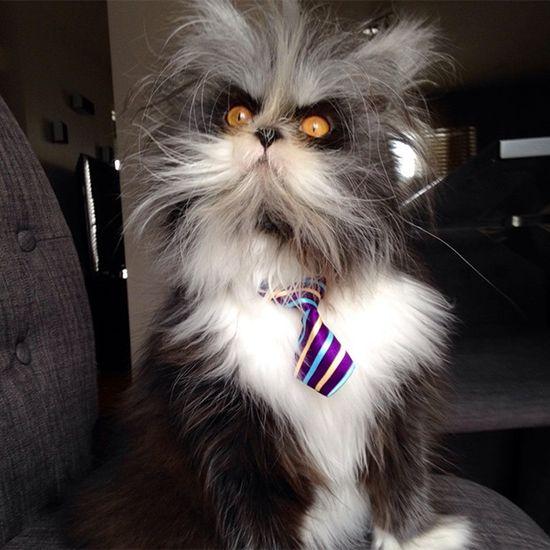 Poznajcie najgroźniejszego kota na świecie