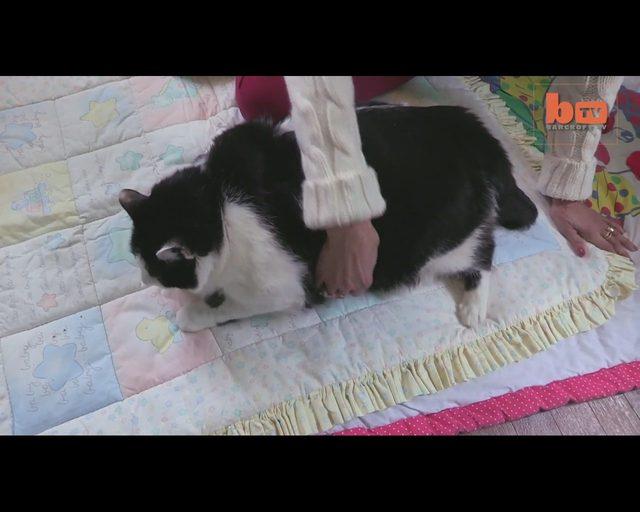 Ten kot jest tak GRUBY, że zamiat chodzić, CZOŁGA się VIDEO
