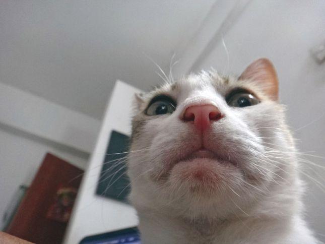Kot Selfie