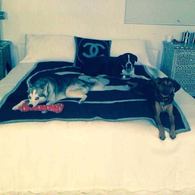 Nawet jej psy śpią na poduszkach Chanel (FOTO)