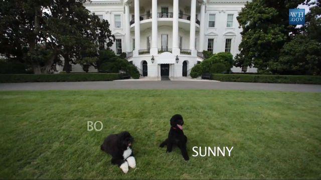 Nowy mieszkaniec w Białym Domu (VIDEO)