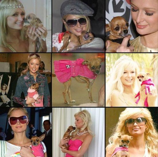 Paris Hilton prze�ywa strat� najbli�szego przyjaciela