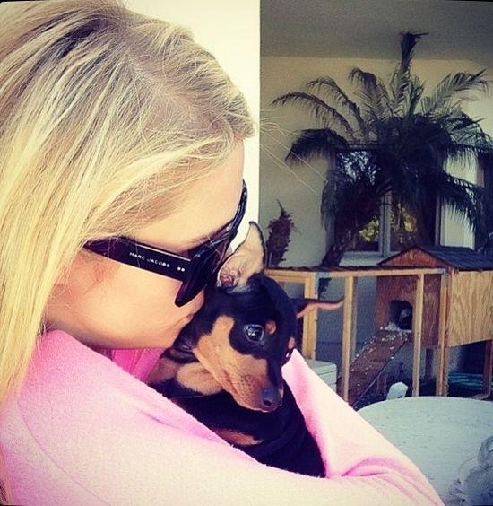 Paris Hilton od dzieci woli psy
