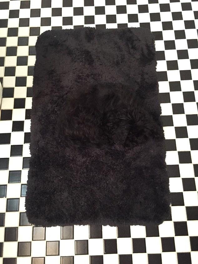 To nie jest zwykły, łazienkowy dywanik. Czy widzisz...