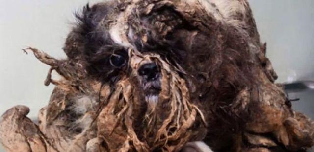 To nie jest KUPA ŚMIECI, a żywe zwierze (VIDEO)