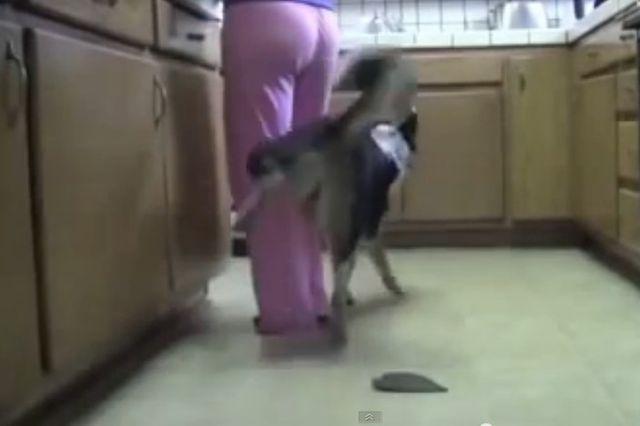 Pies, który jeździ na deskorolce i hulajnodze (VIDEO)