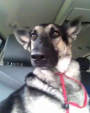 Genialny pies czy nieuczciwy pan? [VIDEO]