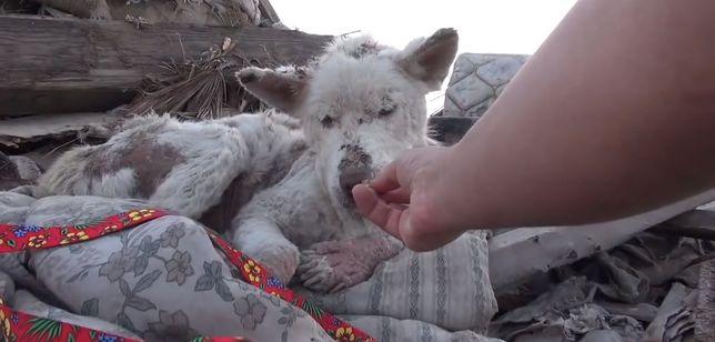 Łzy same napływają do oczu – oto historia bezdomnego psa