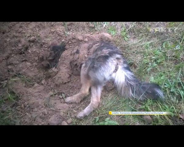 Bary - pies zakopany �ywcem - znajdzie dom w domu policjanta