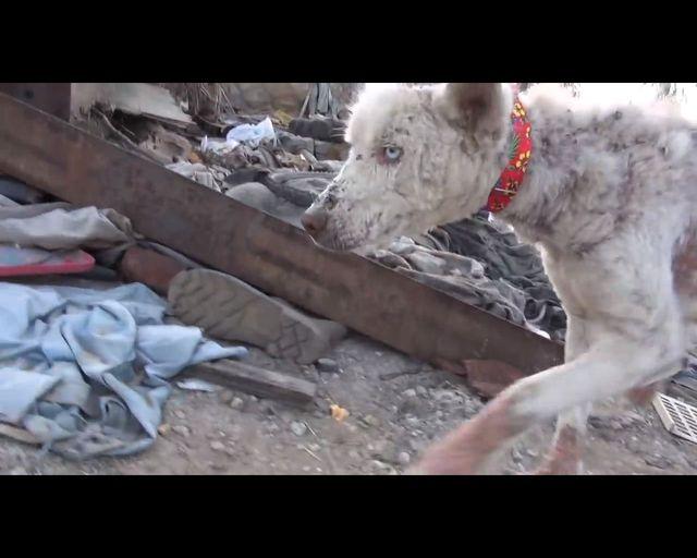 Łzy same napływają do oczu - oto historia bezdomnego psa