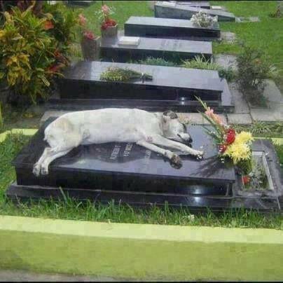To łamie serce - pies wierny nawet po śmierci swego pana