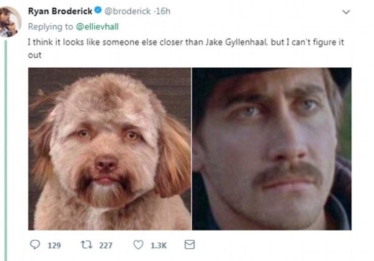 Jake Gyllenhaal ma sobowtóra! Jest nim PIES o ludzkiej twarzy