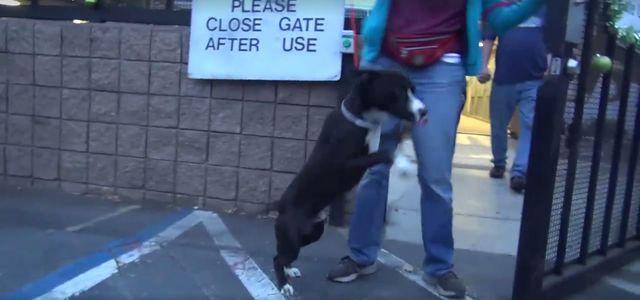 Ten pies uświadomił sobie właśnie, że opuszcza schronisko