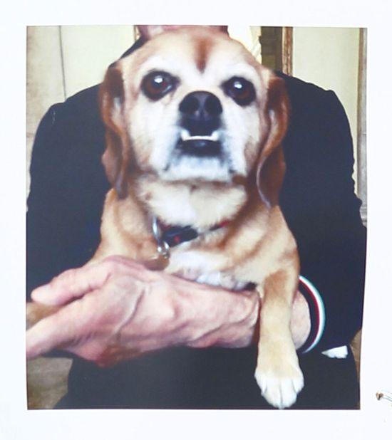 Sylvester Stallone zgubił psa