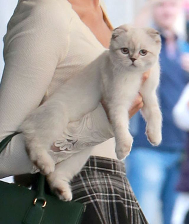Seksowna kocia mama (FOTO)