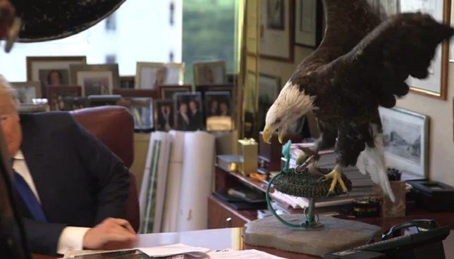 Donald Trump zaatakowany przez orła [VIDEO]