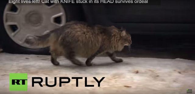 Ten kot uratowa� noworodka przed �mierci� (VIDEO)