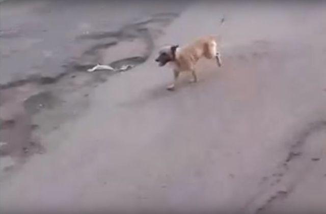 Historia tego psa wyciska łzy (VIDEO)