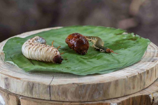 Wygląda smacznie? Zobacz, jak uczestnicy Wyspy Przetrwania jedzą robaki