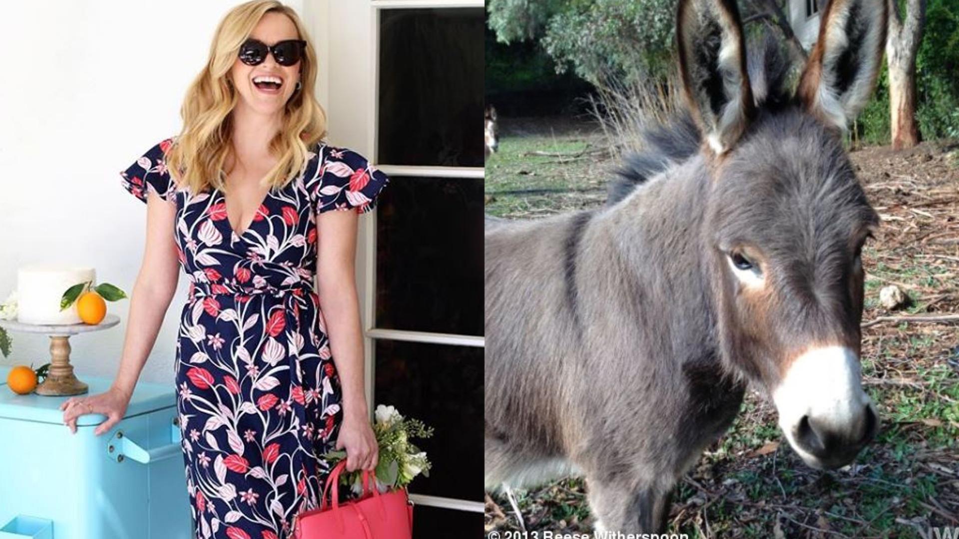 Reese Witherspoon i jej ulubiony zwierzak