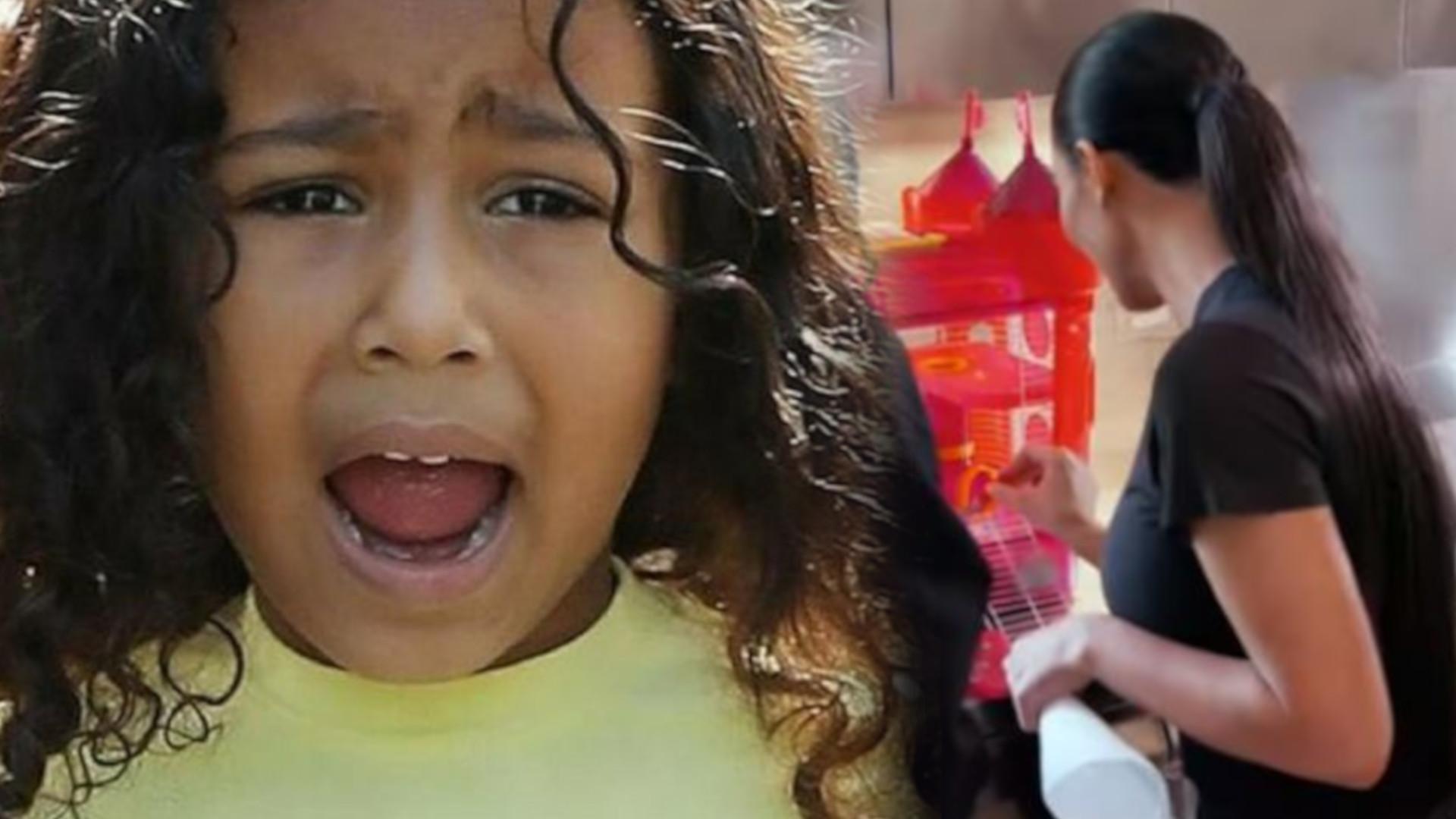 Zdechł chomik North West – Kim Kardashian wpadła w panikę i obwiniła o wszystko Khloe