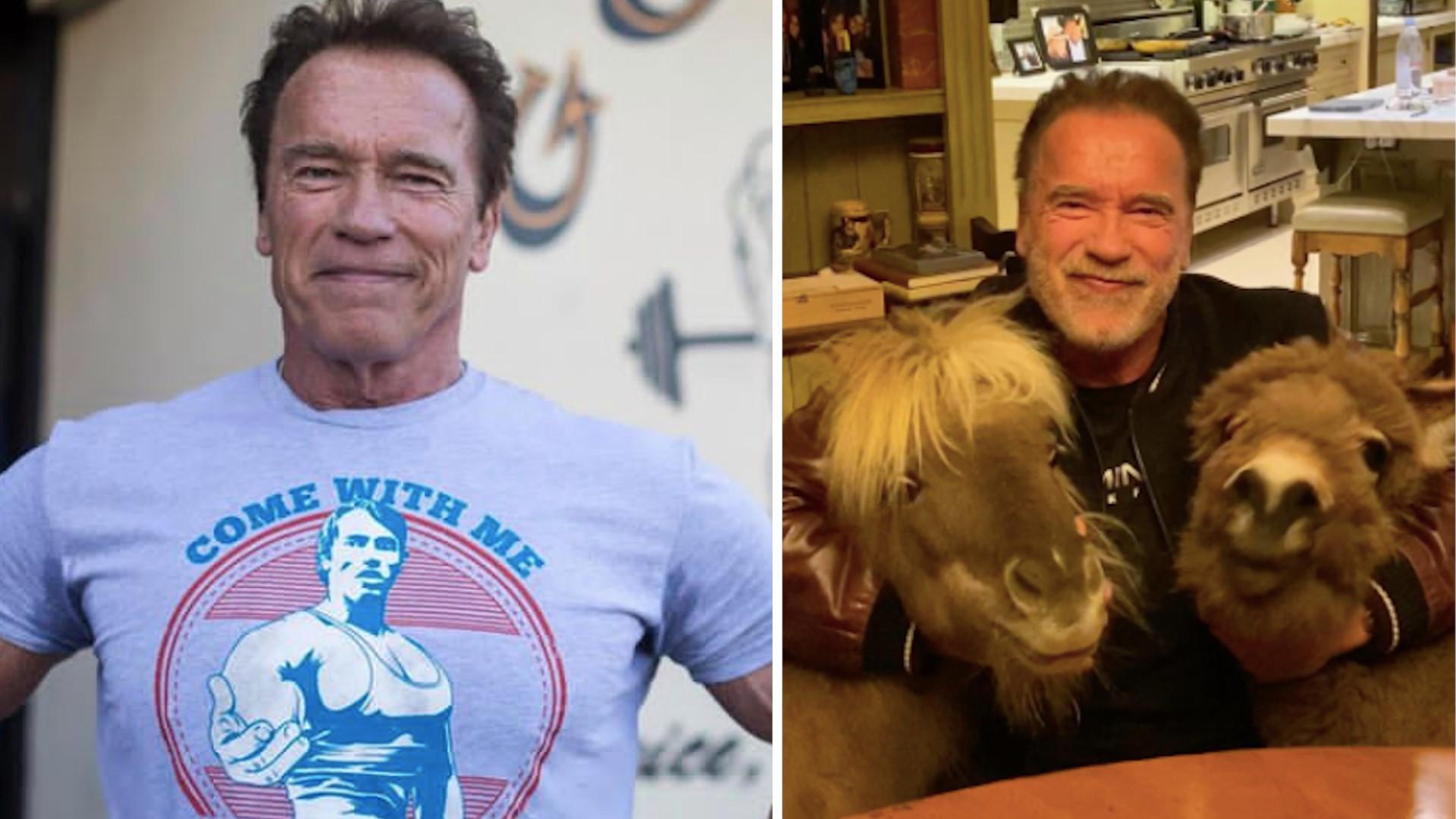 OMG! Arnold Schwarzenegger trzyma osła i kucyka w swoim domu! (WIDEO)