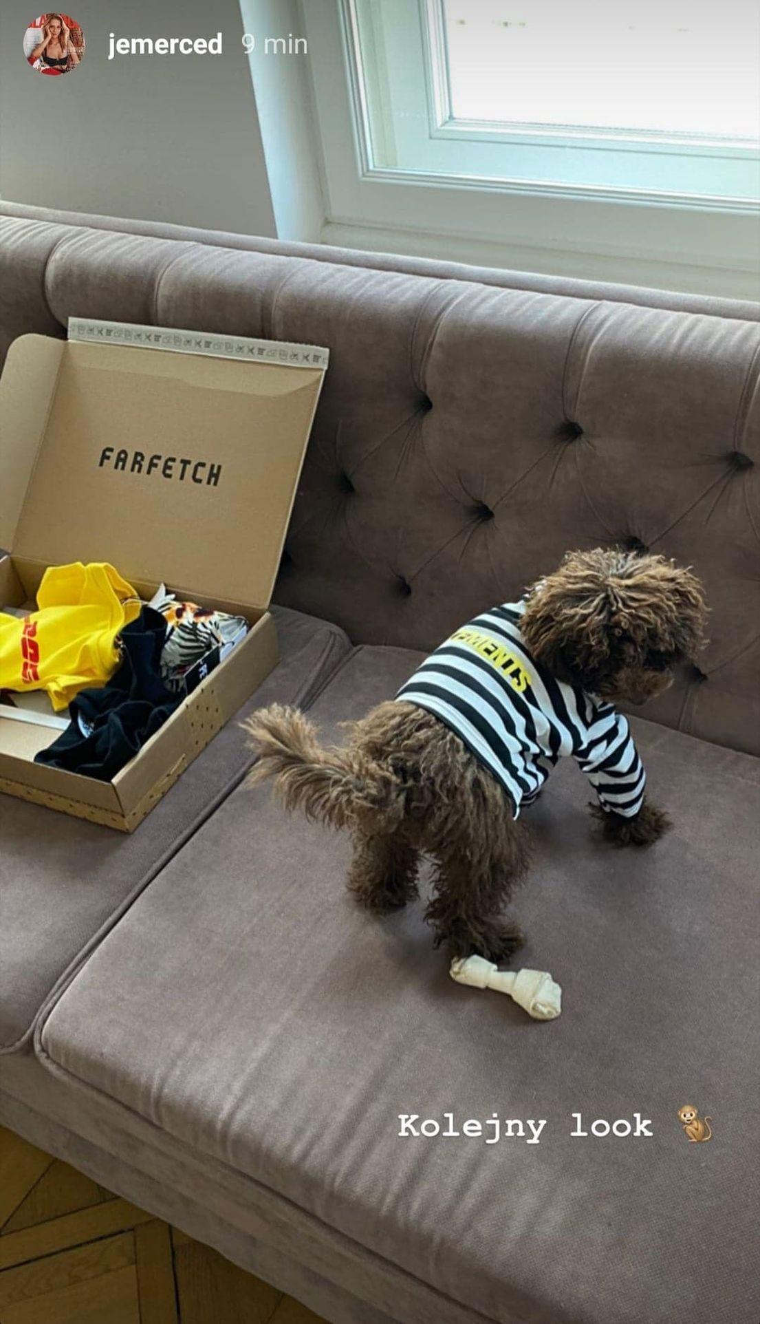 Pies Jessiki Mercedes w koszulce