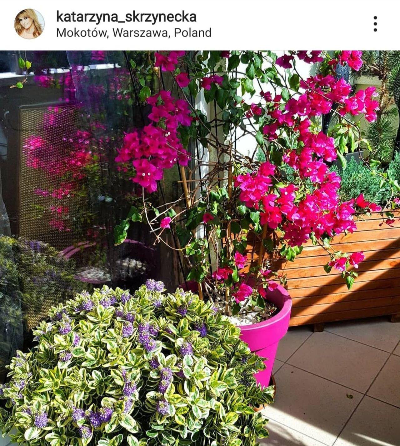 Rośliny na balkonie Skrzyneckiej